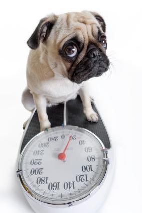 dog_on_scale